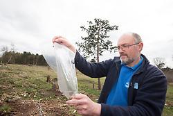 RSPB Project Manager Mike Coates holding a bag, part of Field cricket Gryllus campestris translocation project, RSPB Farnham Heath Nature Reserve, Surrey, April