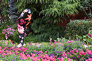 Flower gardens along the Inner Harbour, downtown Victoria, Vancouver Island, British Columbia, Canada