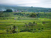 The UNESCO Heritage Listed Rice Fields at Jatiluwh, Bali, Indonesia.