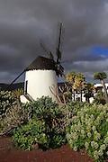 To be edited Windmill and garden at Centro de Artesania Molinos de Antigua, Fuerteventura, Canary Islands, Spain
