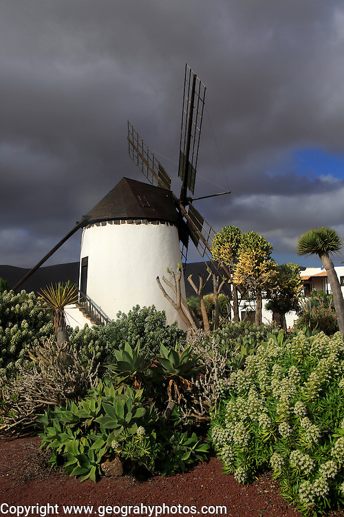 To be edited Windmill and garden at Centro de Artesania Molinos de Antigua, Fuerteventura, Canary Islands, Spain