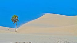 O Parque Nacional dos Lençóis Maranhenses é um parque nacional brasileiro criado em 2 de junho de 1981 numa área de 155 mil hectares nas margens do Rio Preguiças, no nordeste do estado do Maranhão e distante cerca de 260 km de São Luís, ocupando uma área total de 270 quilômetros quadrados, com dunas de até 40 metros e lagoas de água doce. FOTO: Lucas Uebel/Preview.com