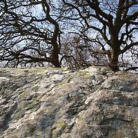 Europe, Great Britain, Wales. Dyffryn Ardudwy stone and tree.