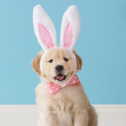 20150214 Easter Dogs and Puppies
