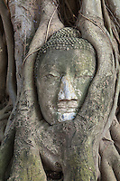 This stone head of Buddha has become entrapped in the roots of a Banyan tree at Wat Mahathat, the roots continue to grow.  This has resulted in one of the most unusual sights at Ayutthaya.