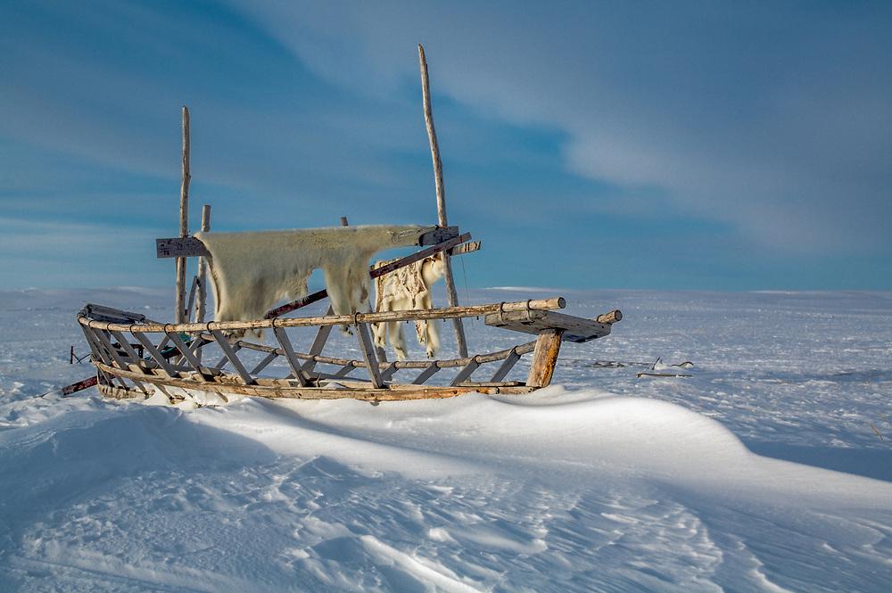 Whale boat frame and Polar bear skin, Point Hope, Alaska