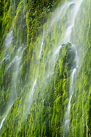 Near Wahclella Falls in the Columbia River Gorge, the almost constant rain in Spring creates numerous smaller waterfalls that cascade down the moss covered walls of the canyons.