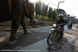 Lowbrow's Mikey Arnold, better known as Mikey Revolt, riding a Royal Enfield Himalayan rides past an elephant in Motorcycle Sherpa's Ride to the Heavens motorcycle adventure in the Himalayas of Nepal. Riding from Chitwan to Daman. Tuesday, November 12, 2019. Photography ©2019 Michael Lichter.