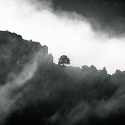 A tree emerges from the fog on the top of a cliff.