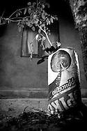 växt i plastpåse, Siriyagama, Sri Lanka.NOT FOR COMMERCIAL USE UNLESS PRIOR AGREED WITH PHOTOGRAPHER. (Contact Christina Sjogren at email address : cs@christinasjogren.com )