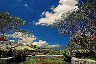 Bali Water Lilies