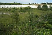 Monkton Nature Reserve, Kent, Wildlife, Chalk Pit, Butterfy, butterflies, flowers