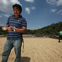 Miguel Angel Montes checks drying coffee on the patios at El Jabali coop. Miguel Angel is in charge of the mill. Cooperativa El Jabali is a certified Fairtrade coffee producer based in El Salvador.