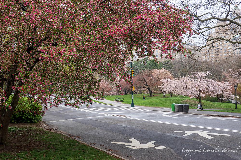 Central Park, April 8, 2020.