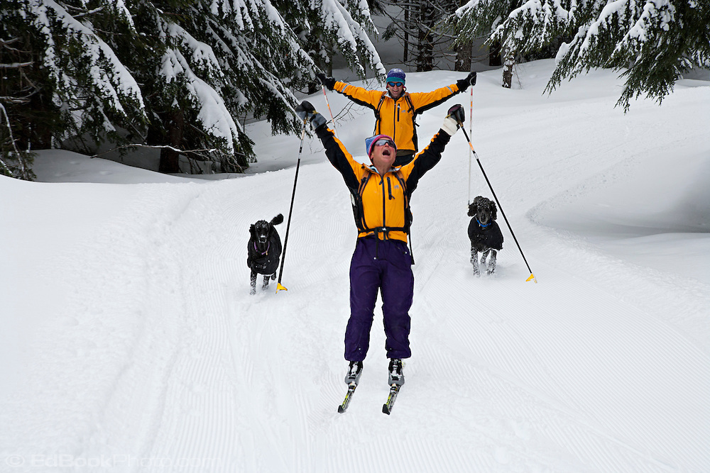 cross country skiers and french poodles ski toward High Hut on the Mount Tahoma Trails cross country ski trail system in the Washington state Cascade Mountain Range, Washington, USA