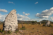 Field of termite mounds,<br />