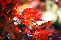 Autumn's spectacular colors, all in one leaf.