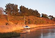 Yacht moored amongst reeds on the River Deben, Ramsholt, Suffolk, England