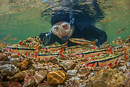 Underwater Scene (Snorkeler observing Bleeding Shiners and Ozark Minnows)<br />
