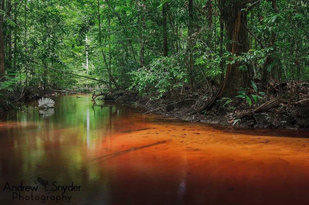 Blackwater creek leading to Corentyne River, Guyana