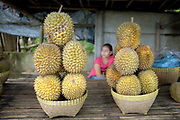 Durian fruit for sale on a roadside stall, Lombok, Indonesia
