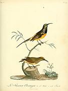 Sucrier oranga. from the Book Histoire naturelle des oiseaux d'Afrique [Natural History of birds of Africa] Volume 6, by Le Vaillant, Francois, 1753-1824; Publish in Paris by Chez J.J. Fuchs, libraire 1808