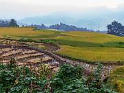 Rice terraces in Yunnan Province, China