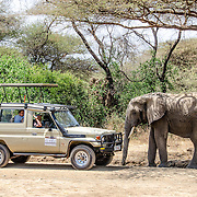 An elephant walks up to a safari vehicle with tourists at Lake Manyara National Park in northern Tanzania.