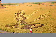 Panjin: Rice Paddy Art Attracts Tourists in NE China, 26 September 2016