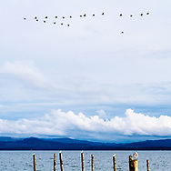 Walking along the banks of the Willapa Bay in Oysterville, WA presents wonderful views and great photo-graphy opportunites of landscapes, wildlife, and waterfowl.