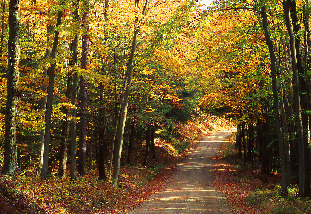 Autumn road winds through Allegheny National Forest, Warren Co., PA