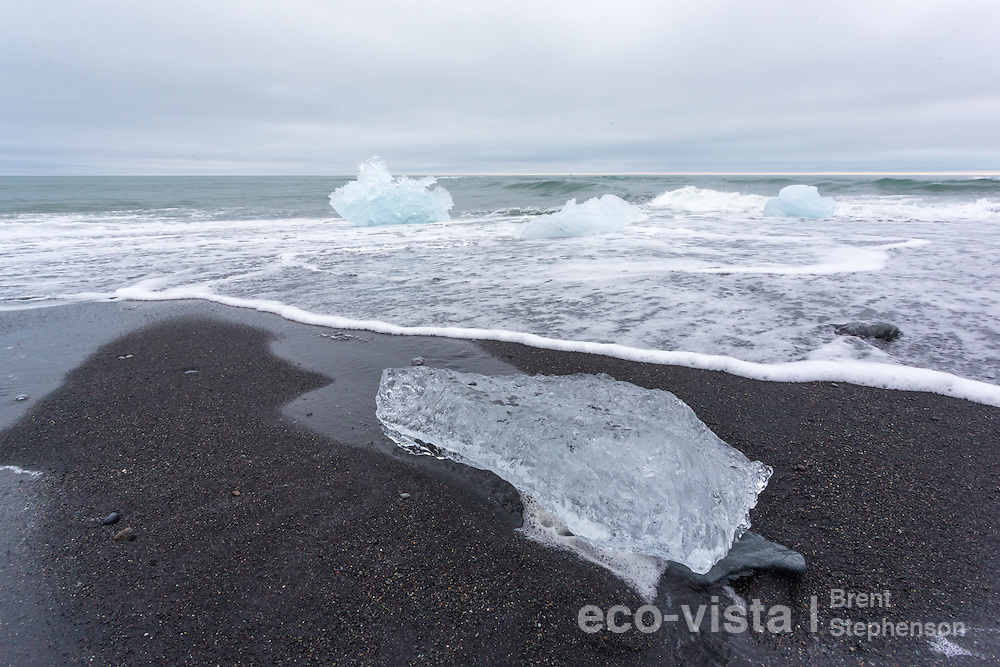 Small pieces of ice, washed ashore onto the black sand beach at Jokulsarlon, undertake their last days, as they are slowly melted and eroded by the waves. Formed from ice that is around 1000 years old, and originally part of the Breidamerkurjokull glacier, a tongue of the Vatnajokull icecap, the largest by volume in Europe. Jokulsarlon, edge of Vatnajokull National Park, Iceland. July.