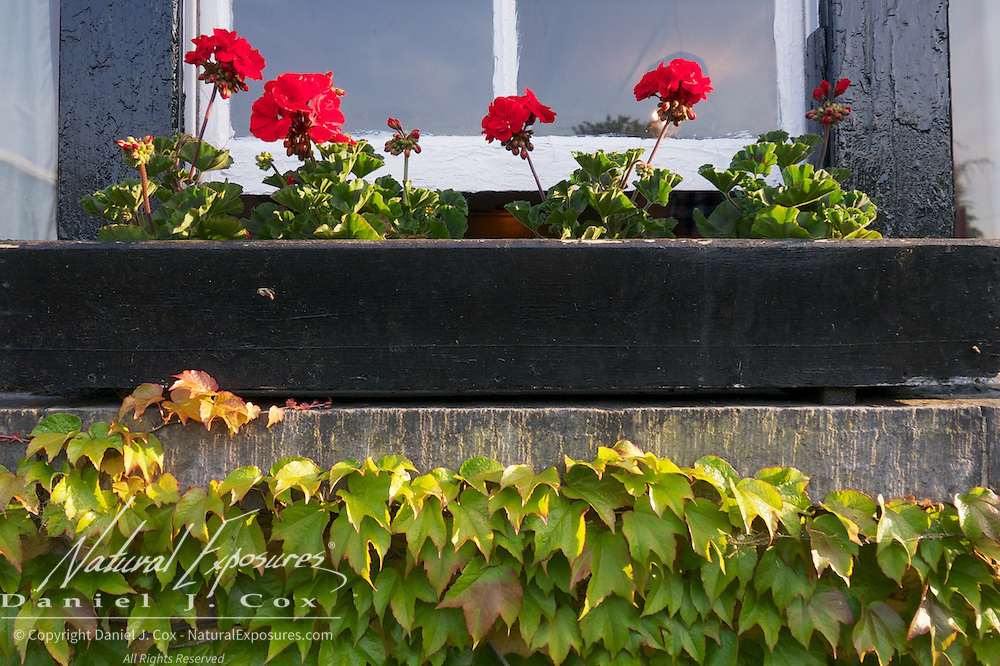 Flowers and Ivy grow on the windowsill of the Dunraven Arms Hotel in Adare, Ireland.