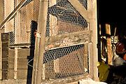 Chicken Wire on old garden shed in Tasmania