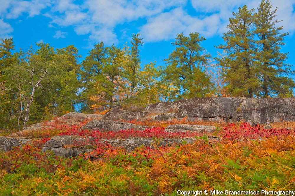 SUmac and bracken fern in autumn<br />Kenora District<br />Manitoba<br />Canada