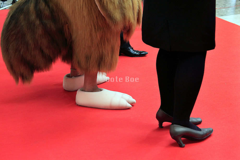 legs of female and male host on the Red Carpet with a as chicken costumed person