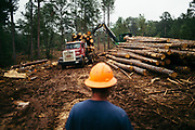 """CHILDERSBURG, AL – AUGUST 3, 2018: Workers prepare for the final harvest of Loblolly Pine on a tract located 50 miles outside of Birmingham. <br /> <br /> Rick Nelms, a private forestry consultant, is hired by landowners, appraisers and banking institutions alike to evaluate and oversee timber harvests, which supply the raw material needed by various mills in the region to create everything from paper products and furniture to telephone poles and plywood. """"We can grow timber pretty fast down here to supply the demand for wood fiber,"""" Nelms said. """"The big problem with Southern Yellow Pine though is there's not enough competition for it. There's too much supply for the demand."""" Nelms, who has been working in the industry for over thirty years, says landowners used to get $500 for an acre of """"thinning"""" –the partial removal of timber intended to improve the growth and value of the residual stand. """"Now, it's around $150 per acre,"""" Nelms said. """"The trouble is it's 15 years before you know if it's a good idea or not. So as soon as that tree hits the ground it gets complicated in a hurry. Years ago, it was a pretty good investment. Now people just don't want to do it. And some people are hung, because that's all they got."""" CREDIT: Bob Miller for The Wall Street Journal<br /> TIMBER_AL"""