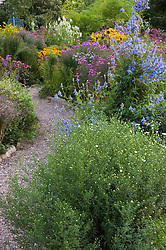 Autumn border with Salvia uliginosa in the foreground at Old Court Nurseries, Colwall