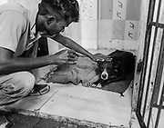 A worker at Varanasi for Animals Rescue and Rehabilitation Center comforts an injured dog.