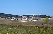 vineyard volnay cote de beaune burgundy france