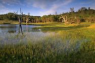 Seasonal pond in spring, Isabel Valley, Santa Clara County, California