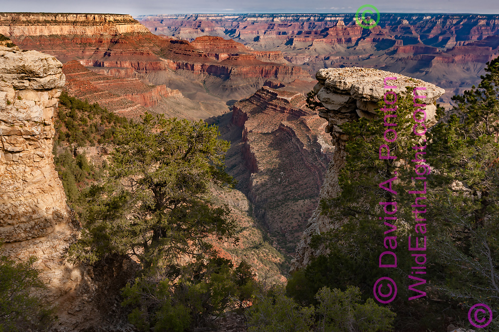 Early morning light in the Grand Canyon from near Grandview Point, Grand Canyon National Park, © David A. Ponton