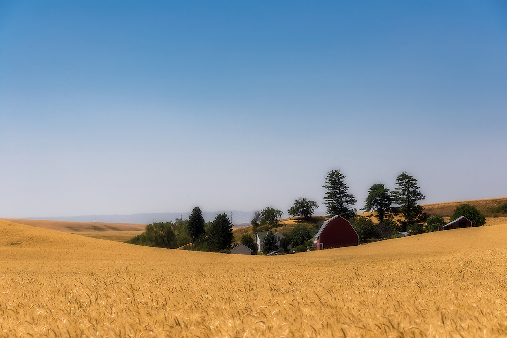 A farm on the Palouse appears semi-submerged among wheatfields and rolling country.