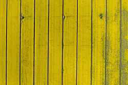 Themenbild - Die Soca oder der Isonzo entspringt am Fuße des Travnik im Mangart-Jalovec-Massiv in den Julischen Alpen, hat eine Länge von 140 Kilometern und mündet südlich von Monfalcone in den Golf von Triest. Hier im Bild Rapsfeld. Grado, Italien am Sonntag, 14. April 2019 // In the delta of the river Isonzo. The Soca (pronounced in Slovene) or Isonzo (pronounced in Italian; other names Friulian: Lusinç, German: Sontig, Latin: Aesontius or Isontius is a 138 kilometre (86 mi) long river that flows through western Slovenia (96 kilometres or 60 miles) and northeastern Italy (43 kilometres or 27 miles. Picture shows canola field. Grado, Italy on Sunday, April 14, 2019. EXPA Pictures © 2019, PhotoCredit: EXPA/ Johann Groder