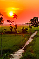 Sunrise over rice fields, near Danang, Vietnam.