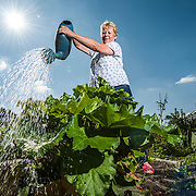 A lady watering plants in the sun.