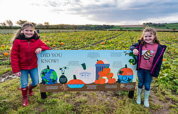 Kilduff Farm, East Lothian, Scotland, United Kingdom, 17 October 2019. Pumpkin Patch: The pick your own pumpkin patch gears up for its opening tomorrow. In its second year, Lucy and Russell Calder and their daughters, Maisie (10 years) and Louisa (8 years) make final preparations for visitors. The patch is open this weekend and next, selling a variety of Halloween carving pumpkins and culinary pumpkins.<br /> Sally Anderson | EdinburghElitemedia.co.uk
