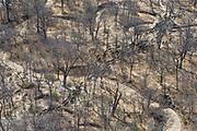 Buffalo (Syncerus caffer)<br /> Cahora Bassa<br /> MOZAMBIQUE, Africa