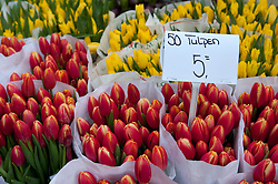 Fresh tulips for sale in flower market in central Amsterdam in Netherlands