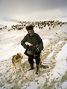 """Shepherd leaving in the morning. Wolf attack on livestock is common..Campment of the """"second"""" Sary Tash. Ustad's Ghulam's camp..Winter expedition through the Wakhan Corridor and into the Afghan Pamir mountains, to document the life of the Afghan Kyrgyz tribe. January/February 2008. Afghanistan"""